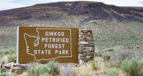 Ginkgo Petrified Forest